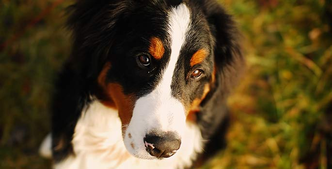 County Dog Licensing Rules