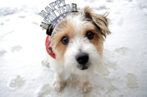2013-12-21-dog-happy-new-year