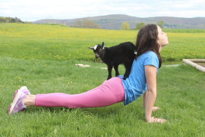 Goat Yoga at Woofstock