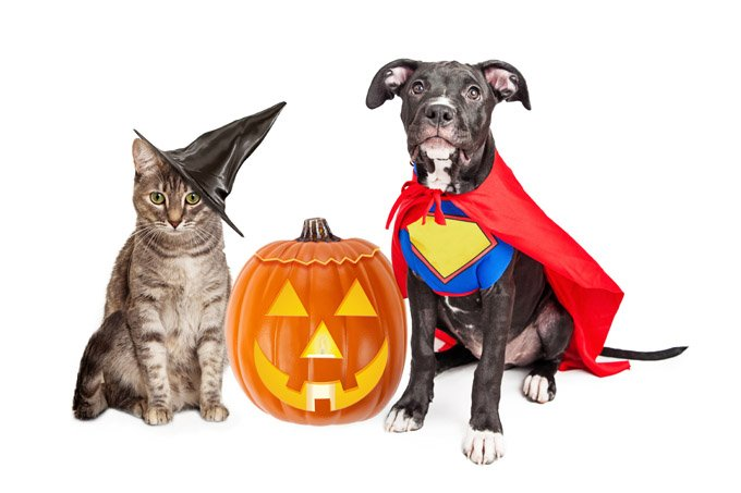 Trick or Treat at the Shelter
