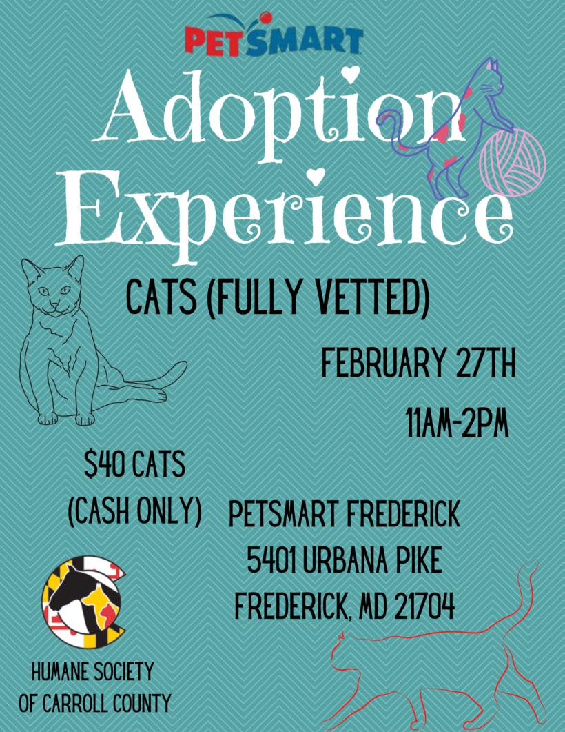 Adoption Experience